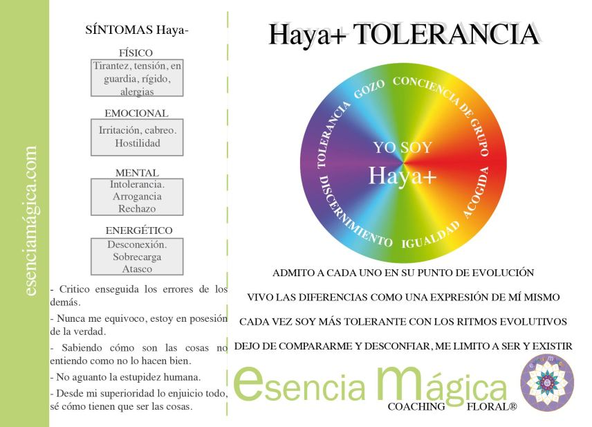 HAYA BACH TOLERANCIA