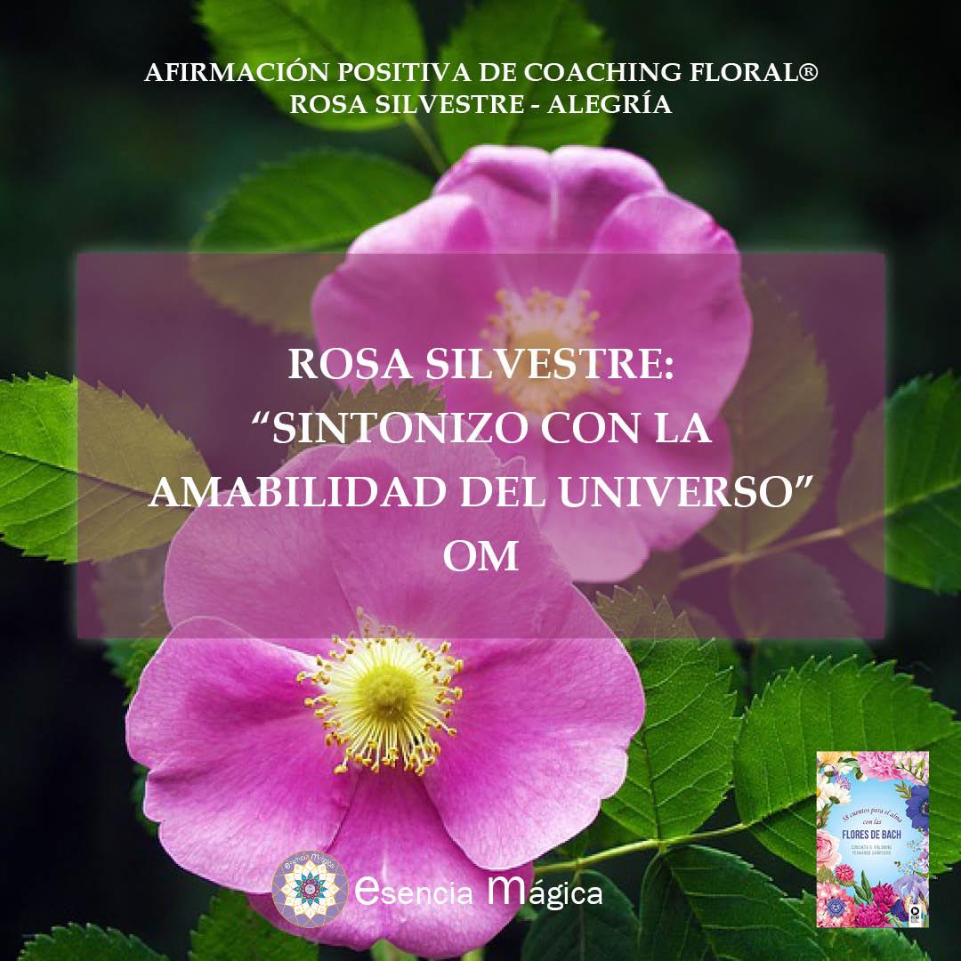 Afirmación positiva de Luz Pura Floral- Rosa Silvestre-Alegría