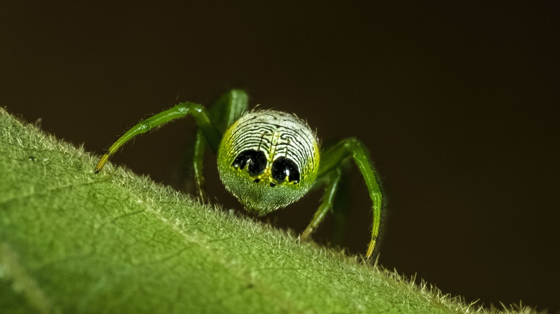 Uma aranha no minimo curiosa.