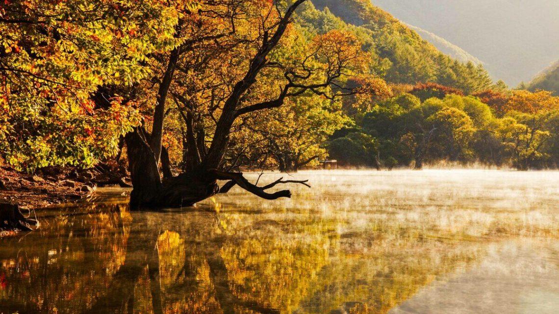 Árvores emergem da superfície deste pequeno reservatório feito pelo homem.