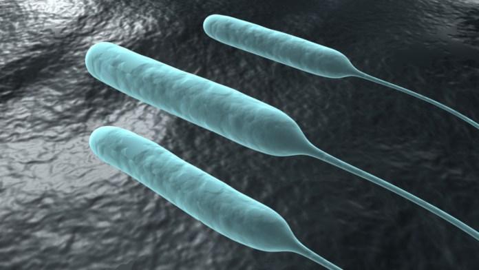 Bacilo piocianico