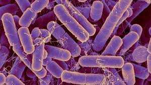 Antibacterianos antiprotozoos