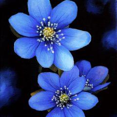Magia azul