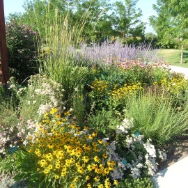Perennial Flower Combinations for Summer