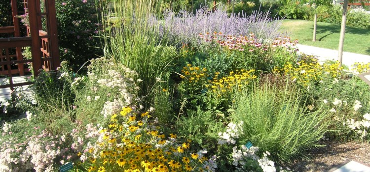 Perennial Flower Combinations