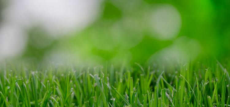How to Identify Lawn Disease Header