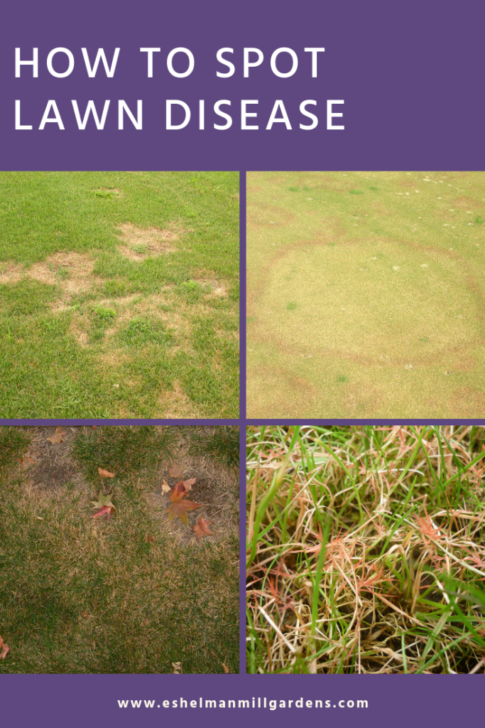 How to Identify Lawn Disease in Lancaster