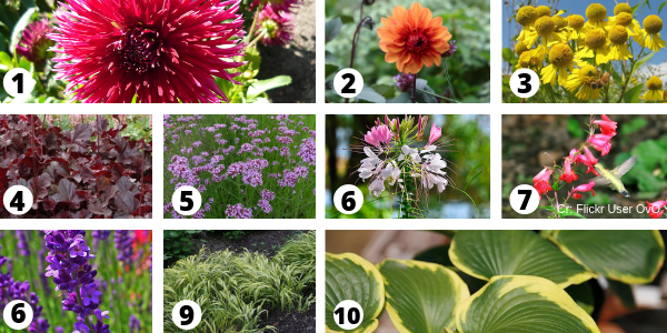 Perennial Flower Combinations for Hot Summer