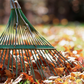 Fall Lawn Care: Aerate and Reseed