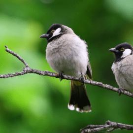 How to Build a Backyard Wildlife Sanctuary