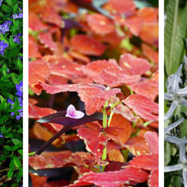 Best Plants for Landscaping in Pennsylvania