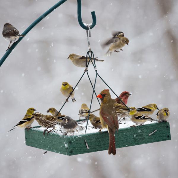Fall Chores Bird Feeders