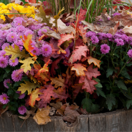 Inspiration for Your Fall Planters in Lancaster County