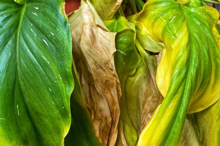 What happens if plants die?