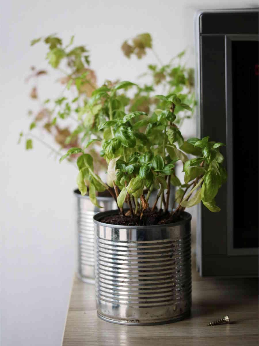 Planter Herbes Aromatiques Jardiniere choisir le bon pot pour cultiver un potager sur balcon