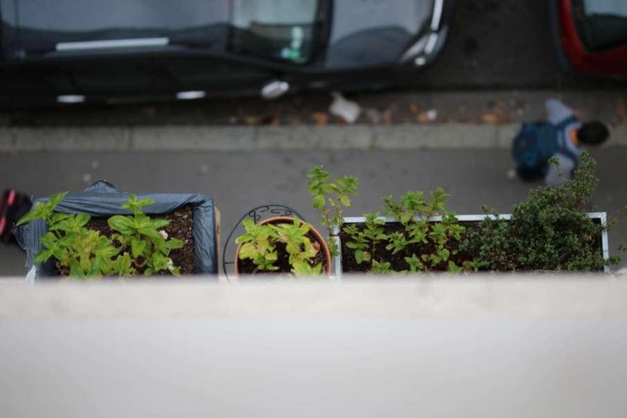 Choisir Le Bon Pot Pour Cultiver Un Potager Sur Balcon Echoppe
