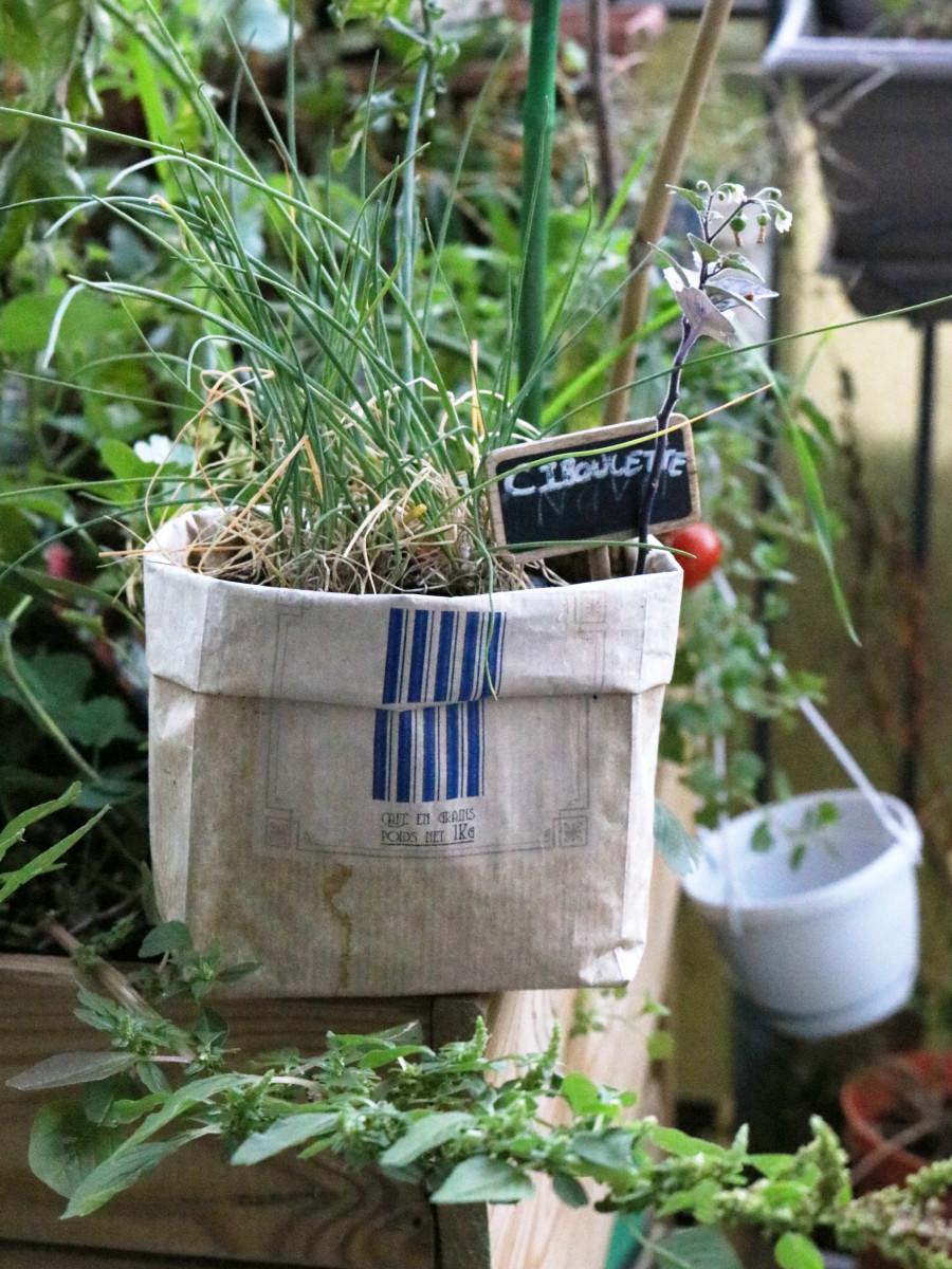 planter de la ciboulette dans un sac de café en kraft récupéré chez les grands voisin