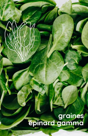 box jardinage bio été : sachet de graines bio et reproducible d'épinard gamma