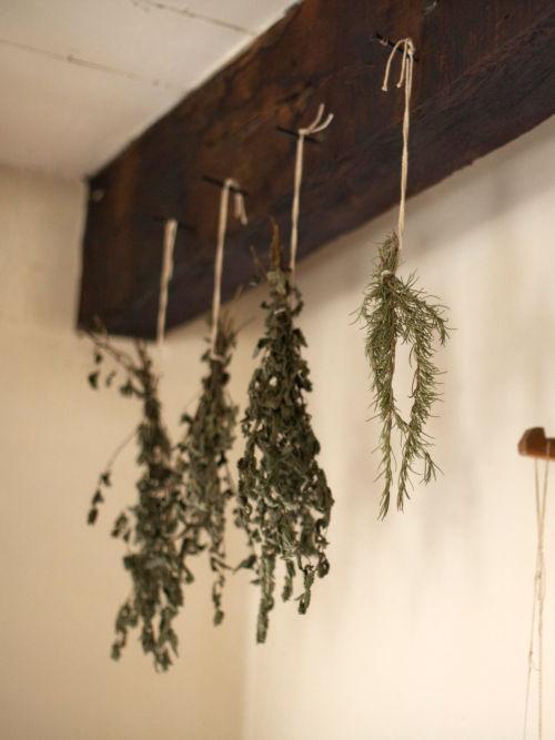herbe séchées suspendues dans la cuisine après les récolte de l'été