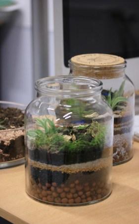 atelier terrarium en entreprise, Paris, IDF, décoration bureau plantes