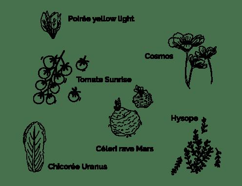 6 variétés box jardinage avec la lune : cosmos, tomate sunrise, celeri rave mars, chicorée uranus, poirée light yellow, hysope, plantes faciles à faire pousser sur un balcon