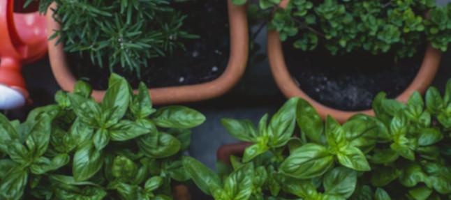 box jardinage cadeau, thème italie pour faire pousser du basilic et des tomates sur balcon
