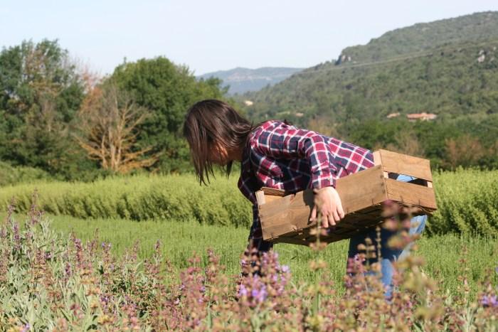 Émilie entrain de récolter les herbes aromatiques sur son exploitation biologique