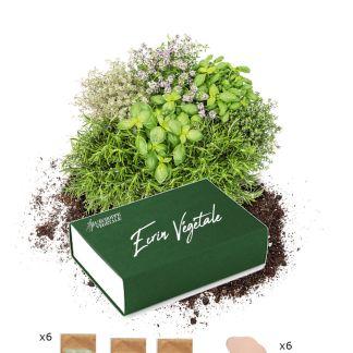 écrin végétal, coffret graines bios herbes aromatiques, idée cadeau jardinage balcon pour noel