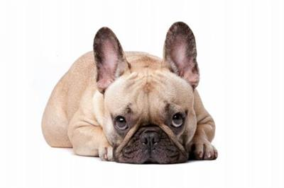 Coursera Dog Emotion and Cognition by Duke University