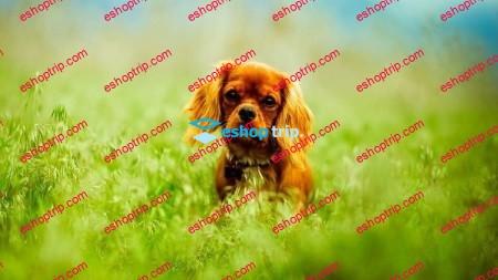 Dog Care Dog Behavior Dog Training For New Owners