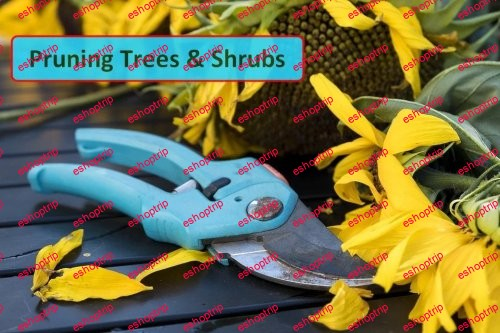 Pruning Trees and Shrubs Everything You Need to Know