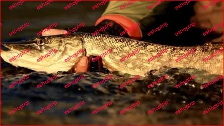 Fishing Demystified Learn how to catch your first fish