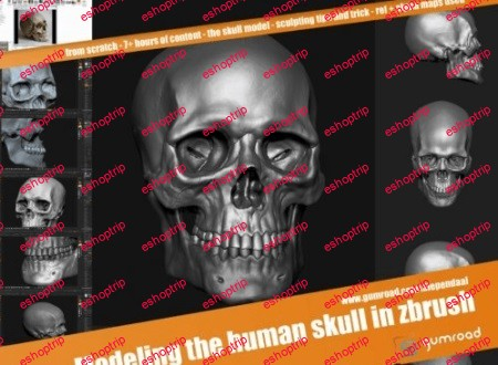 Gumroad Modeling the human skull in zbrush