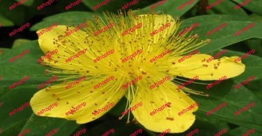 Herbalism Identify Harvest Wild Medicinal Plants