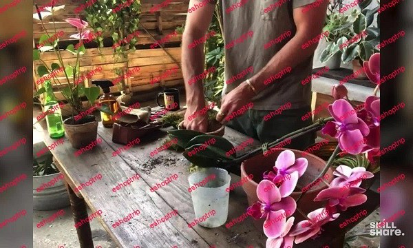 Live Encore Caring for Your Houseplants