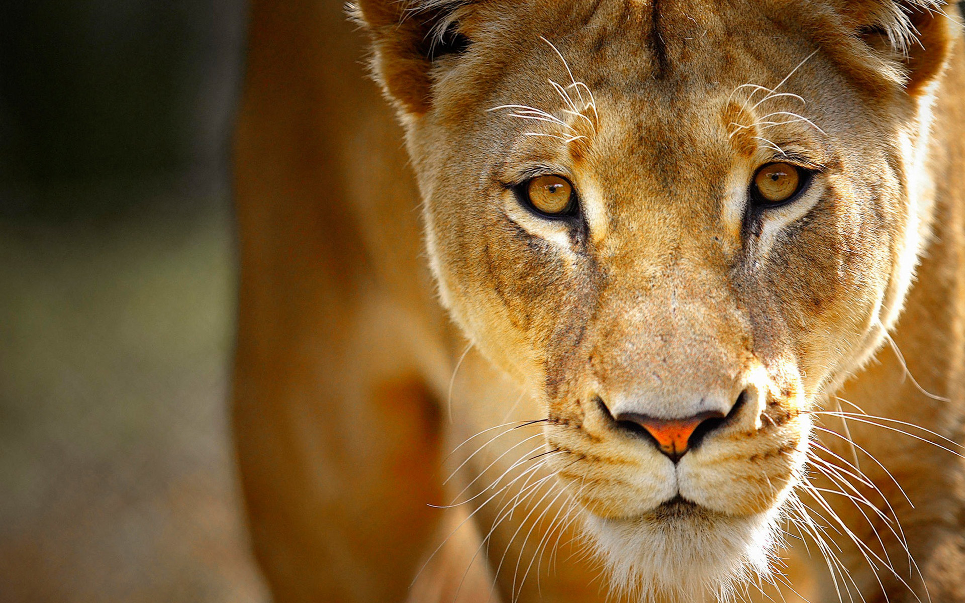 animal close up background