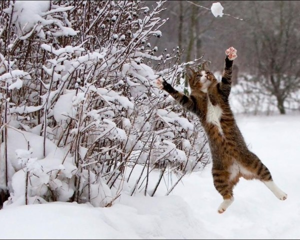 Cats Playing in Snow