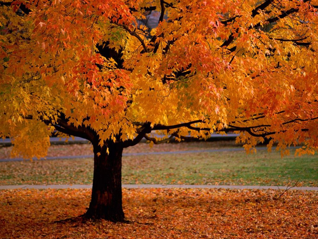 autumn trees leaves wallpaper
