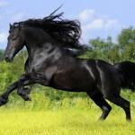 Black Horse Wallpaper 1920x1200 74508