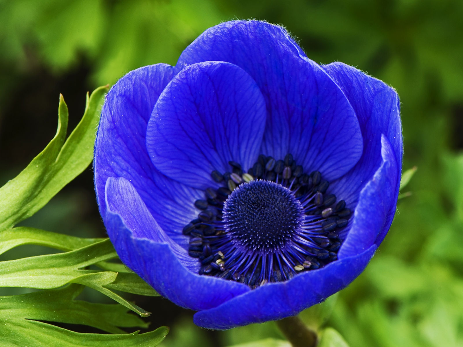 Pretty Blue Flowers With Names