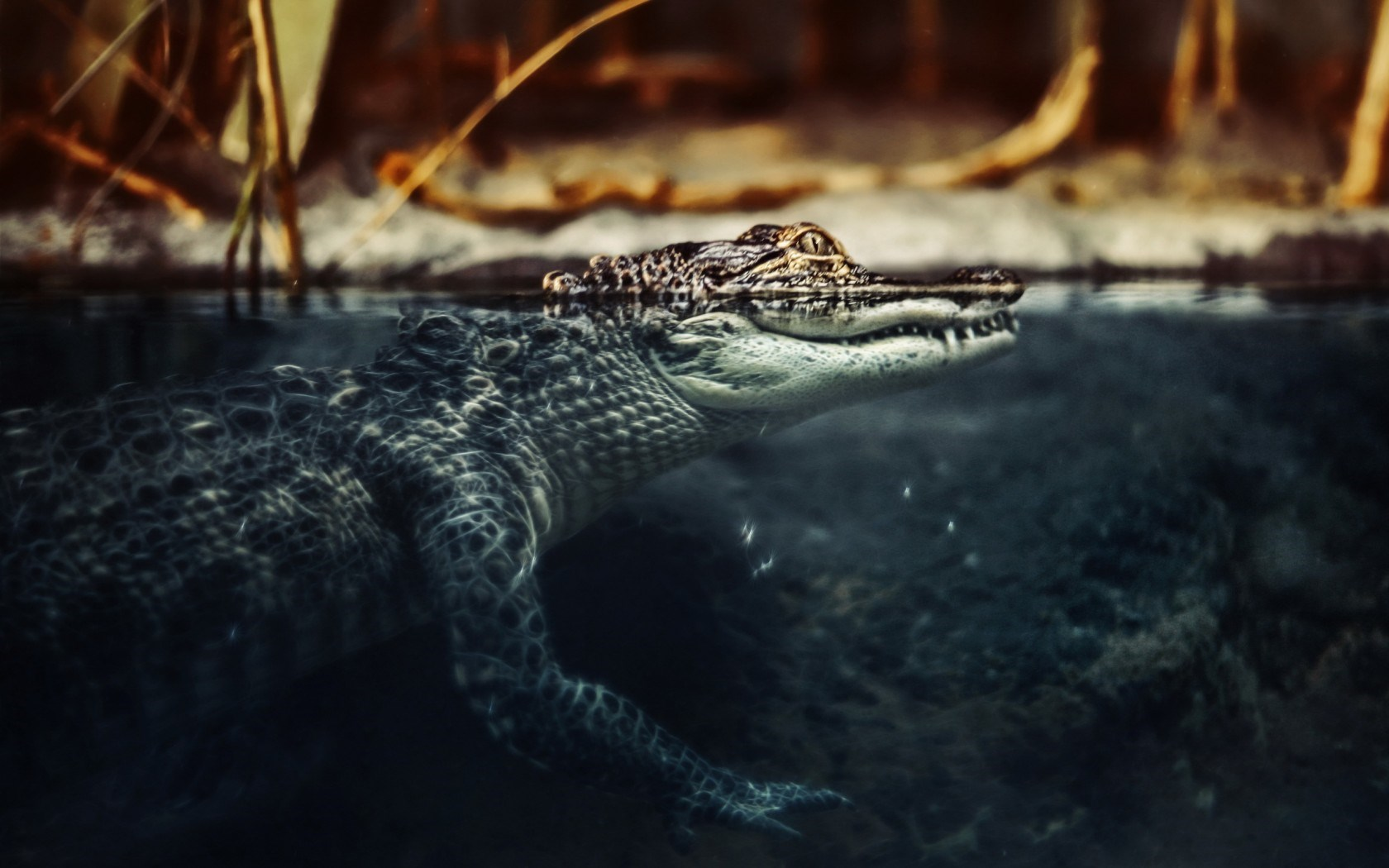 Alligators And Girls Wallpapers