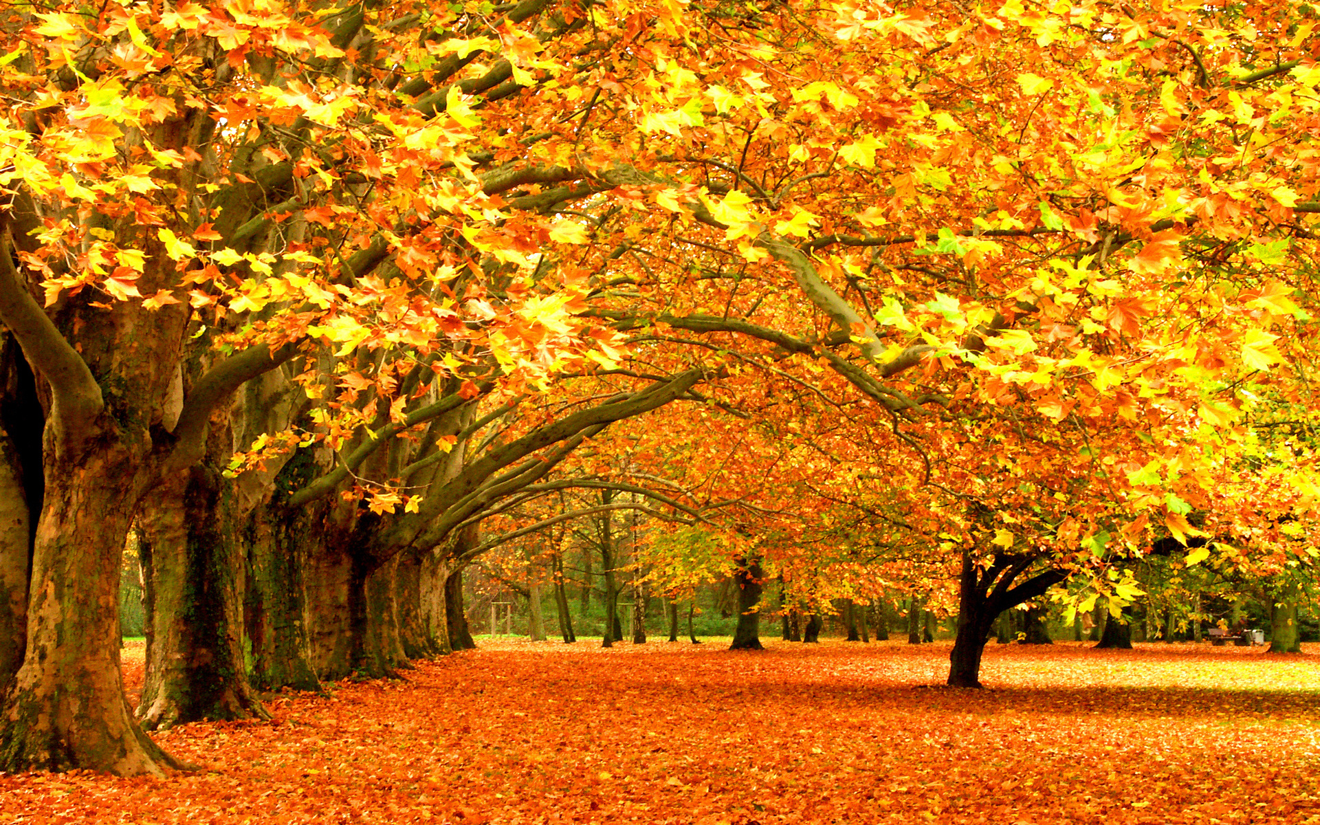 Image result for fall trees