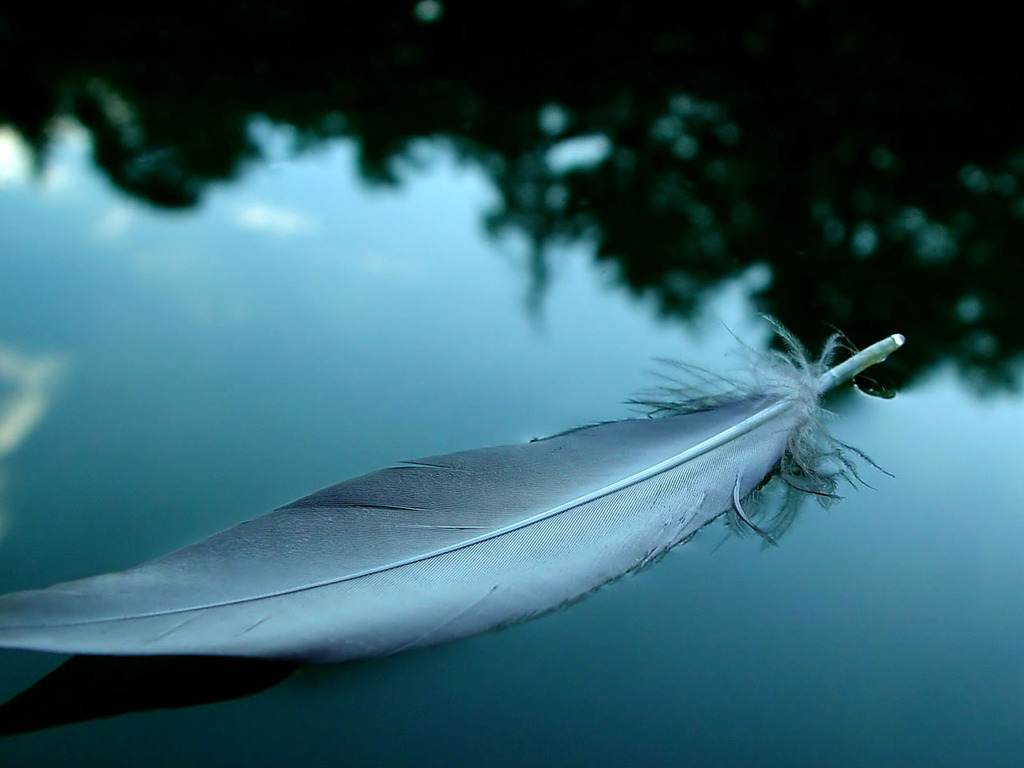 feather wallpaper 1024x768 1164