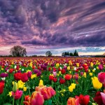 Field Colorful Flowers Wallpaper 1920x1080 22839