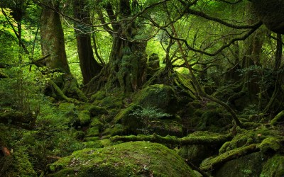 Forest Background wallpaper 1920x1200 #70462