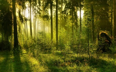 Forest Background wallpaper 1920x1200 #70461