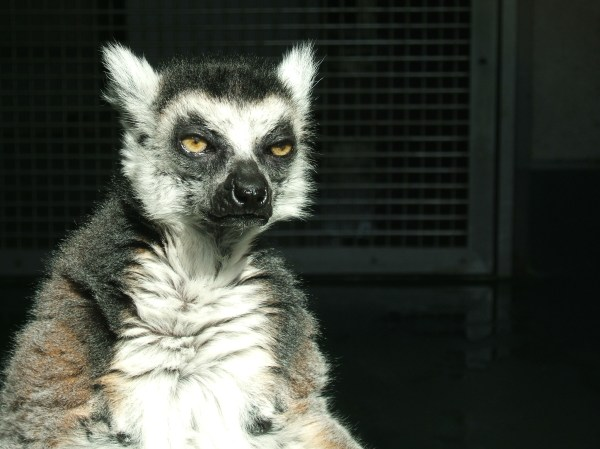 20 I Got This Lemur Meme Pictures And Ideas On Meta Networks