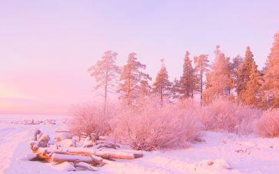 nature pink light