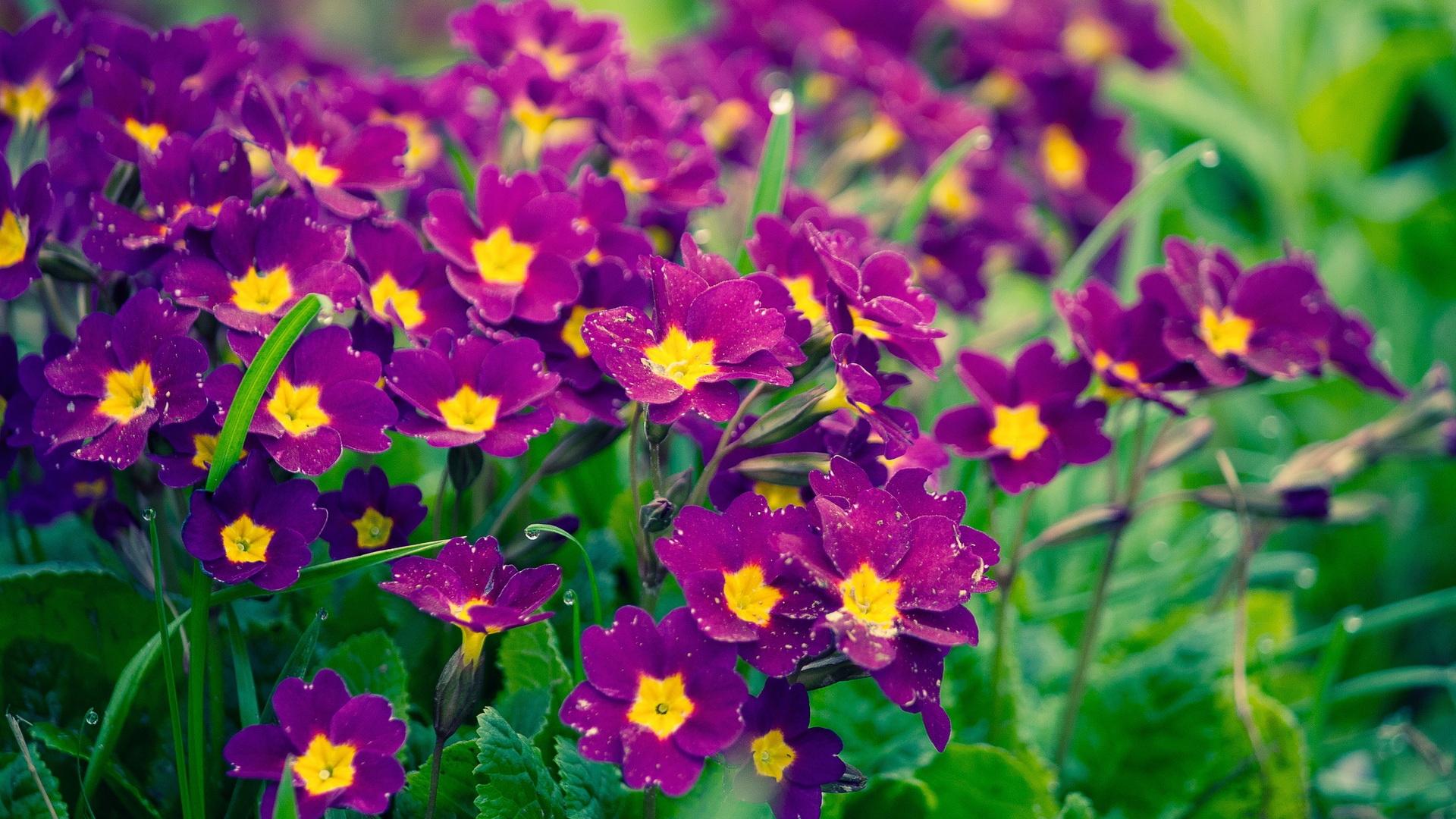 3d Depth Purple Abstract Wallpapers Purple Flowers Wallpaper 1920x1080 38160