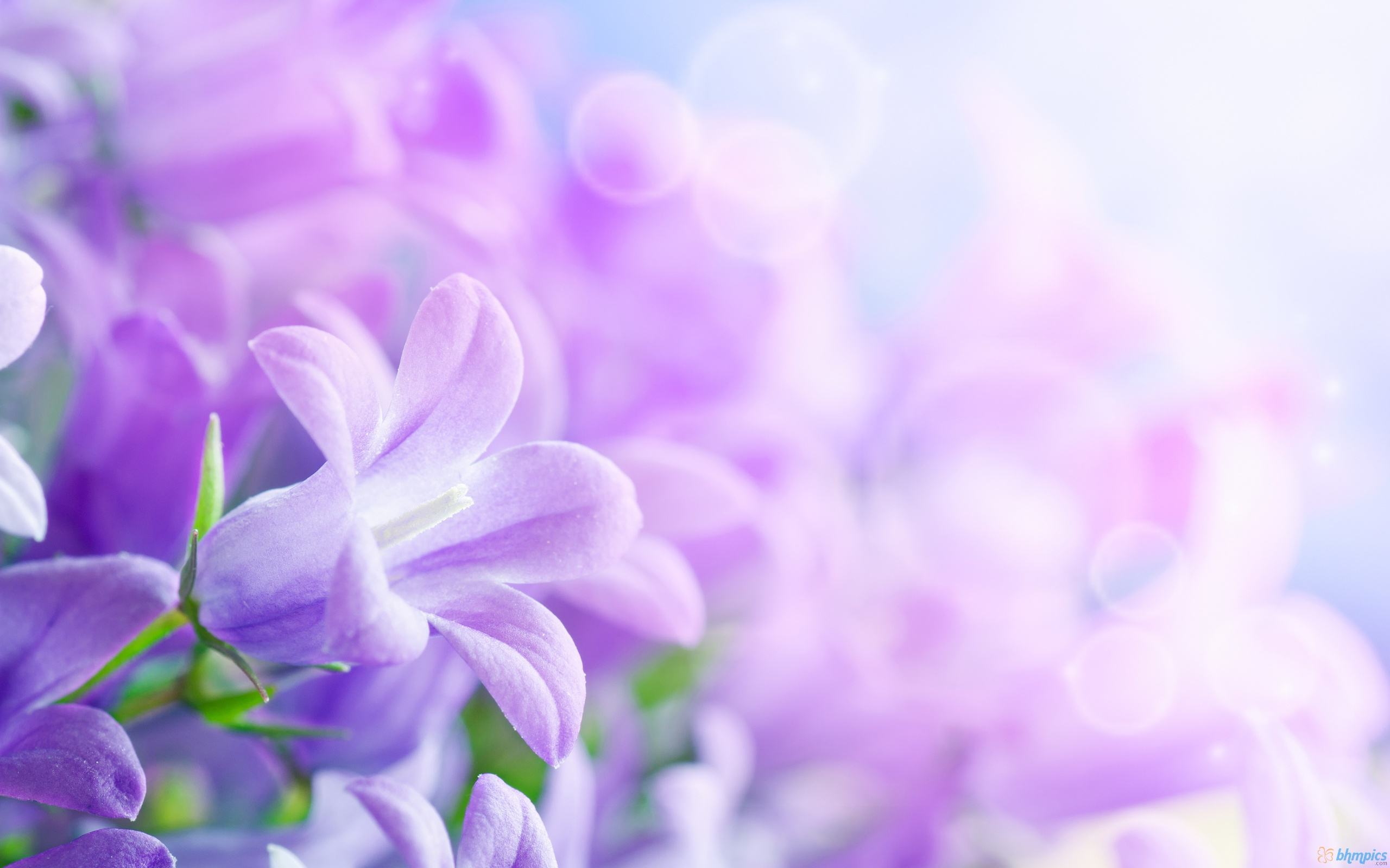 purple flowers background wallpaper